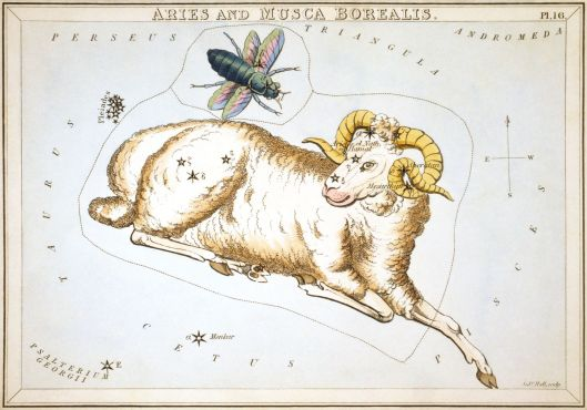 Aries and Musca Borealis as depicted in Urania's Mirror, a set of constellation cards published in London c.1825